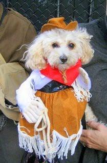 cowgirl dog