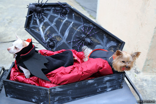 dogs in coffin