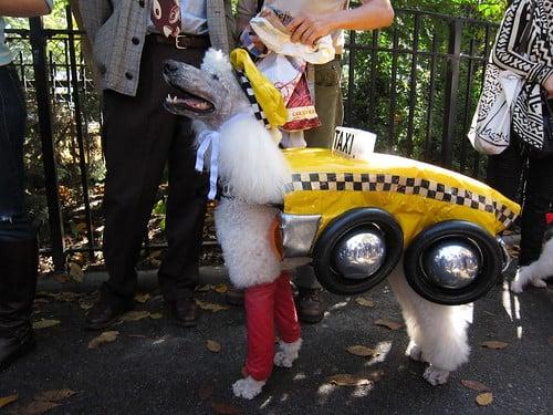 nyc taxi dog