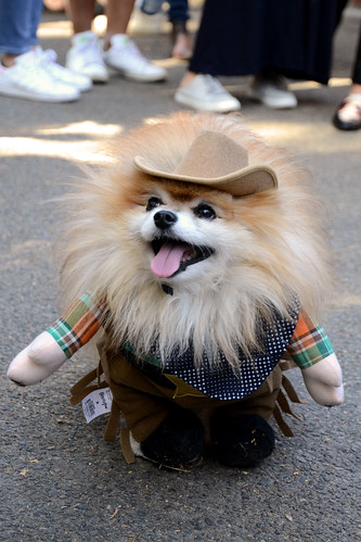 dog dressed as cowboy